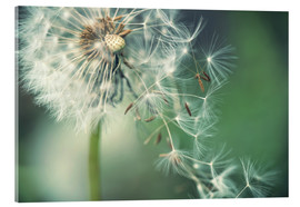Acrylic print  Dandelion in the wind - Julia Delgado