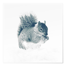 Premium poster squirrel