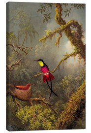 Canvas print  A pair Rotnacken topaz hummingbird - Martin Johnson Heade
