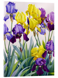 Acrylic print  Yellow and purple irises - Christopher Ryland