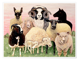 Premium poster  several sheeps - Pat Scott