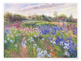 Premium poster  Field of flowers - Timothy Easton