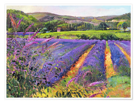 Premium poster  Lavender field - Timothy Easton