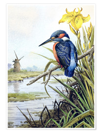Premium poster  Kingfisher with iris and windmill - Carl Donner