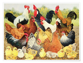 Premium poster  Chicken family - Pat Scott