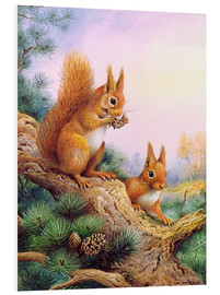 Foam board print  Pair of Red Squirrels on a Scottish Pine - Carl Donner