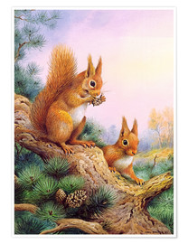 Premium poster  Pair of Red Squirrels on a Scottish Pine - Carl Donner