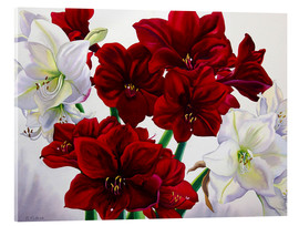 Acrylic print  Red and white Amaryllis, 2008 - Christopher Ryland