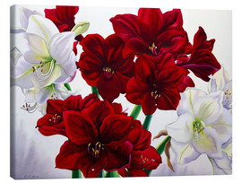 Canvas print  Red and white Amaryllis, 2008 - Christopher Ryland
