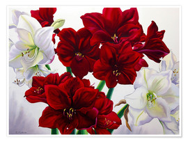 Premium poster  Red and white Amaryllis, 2008 - Christopher Ryland