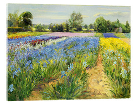 Acrylic print  Flower field - Timothy Easton