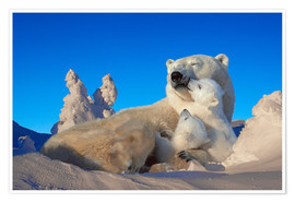 Premium poster  Polar bears cuddling in snow - Tom Soucek