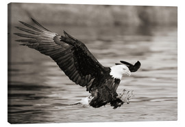 Canvas print  Bald Eagle Hunting - John Hyde