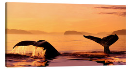 Canvas print  Two humpback whales - John Hyde