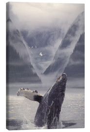 Canvas print  Humpback whale emerging - Ron Sanford