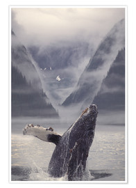 Premium poster  Humpback whale emerging - Ron Sanford