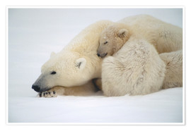 Premium poster  Polar bear mother with cub - Kenneth Whitten