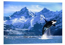 Foam board print  Orca in front of a glacier - John Hyde