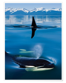 Premium poster Whales in front of the Range Mountains
