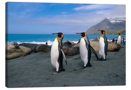 Canvas print  King Penguins on South Georgia Iceland - Tom Soucek