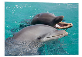 Foam board print  Two bottlenose dolphins - Dave Fleetham