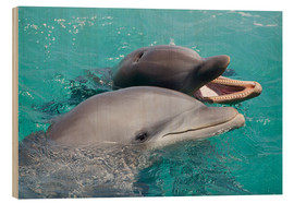 Wood print  Two bottlenose dolphins - Dave Fleetham