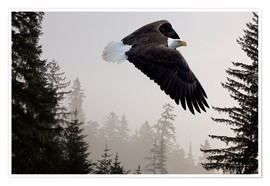 Premium poster Bald Eagle in the Mist