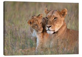 Canvas print  Lioness with cub - Ian Cuming