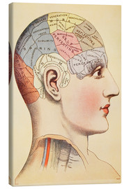 Canvas print  Map of the human brain - Wunderkammer Collection