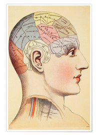 Premium poster  Map of the human brain - Wunderkammer Collection