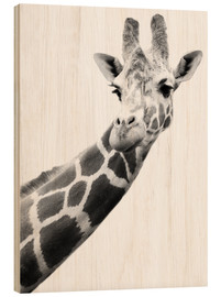 Wood print  Giraffe in black and white - Darren Greenwood
