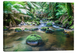 Canvas print  River in the green rainforest of Tasmania, Australia - Matteo Colombo