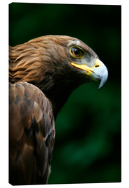 Canvas print  Golden eagle - Deddeda
