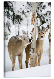 Canvas print  Deers in a winter forest - Michael Interisano