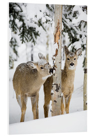 Foam board print  Deers in a winter forest - Michael Interisano