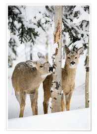 Premium poster Deers in a winter forest