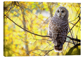 Canvas print  owl on branch - Steve Nagy
