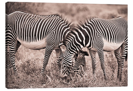 Canvas print  Two Zebras Grazing Together - David DuChemin