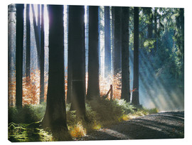 Canvas print  Morning Light in the Forrest - Martina Cross