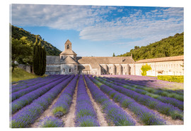 Acrylic print  Famous Senanque abbey with lavender field, Provence, France - Matteo Colombo