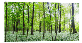 Acrylic print  A forest in springtime with wild garlic - Benjamin Butschell