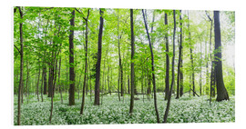 Foam board print  A forest in springtime with wild garlic - Benjamin Butschell