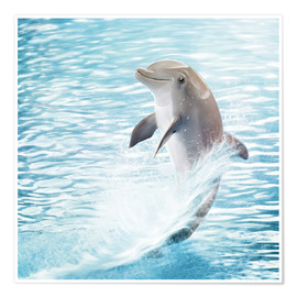 Premium poster  dolphin - Photoplace Creative