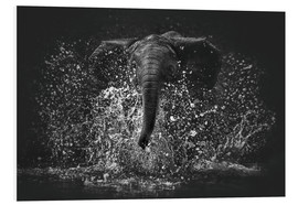 Foam board print  Elephant Power - Manuela Kulpa