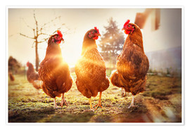 Premium poster  Chickens on the runway - Gabi Stickler