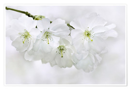 Premium poster spring blossoms