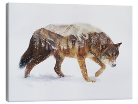 Canvas print  Arctic wolf - Andreas Lie