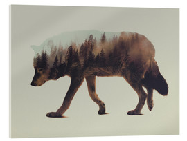 Acrylic print  Norwegian Woods The Wolf - Andreas Lie