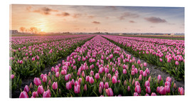 Acrylic print  tulips fields holland - Remco Gielen