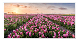 Premium poster  tulips fields holland - Remco Gielen
